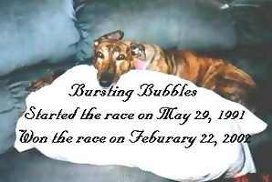 Bursting_Bubbles