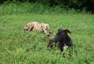 pups resized